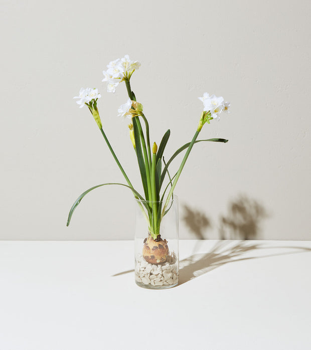 Winter Bulb Kit Paperwhites - piper-and-dune - Home Goods