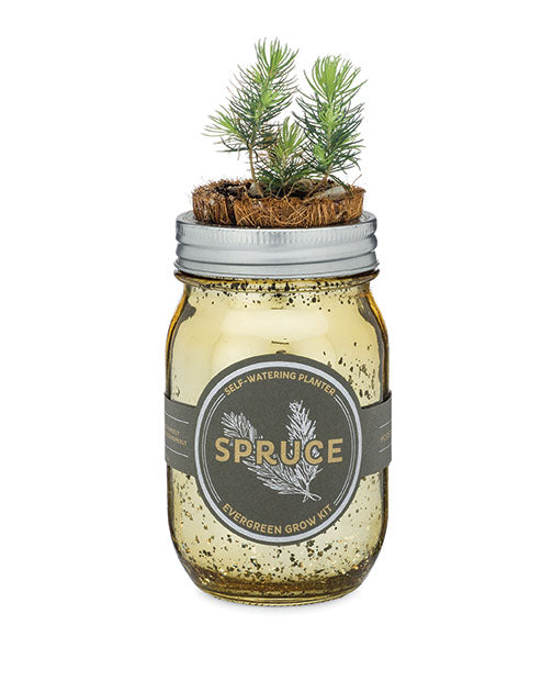 Modern Sprout Pint Garden Jar - piper-and-dune - Home Goods