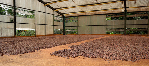 cacao drying centre arhuaco