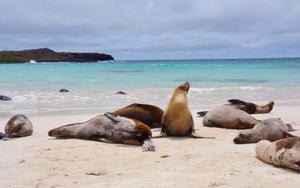 OceanZen relocates to the Galapagos Islands