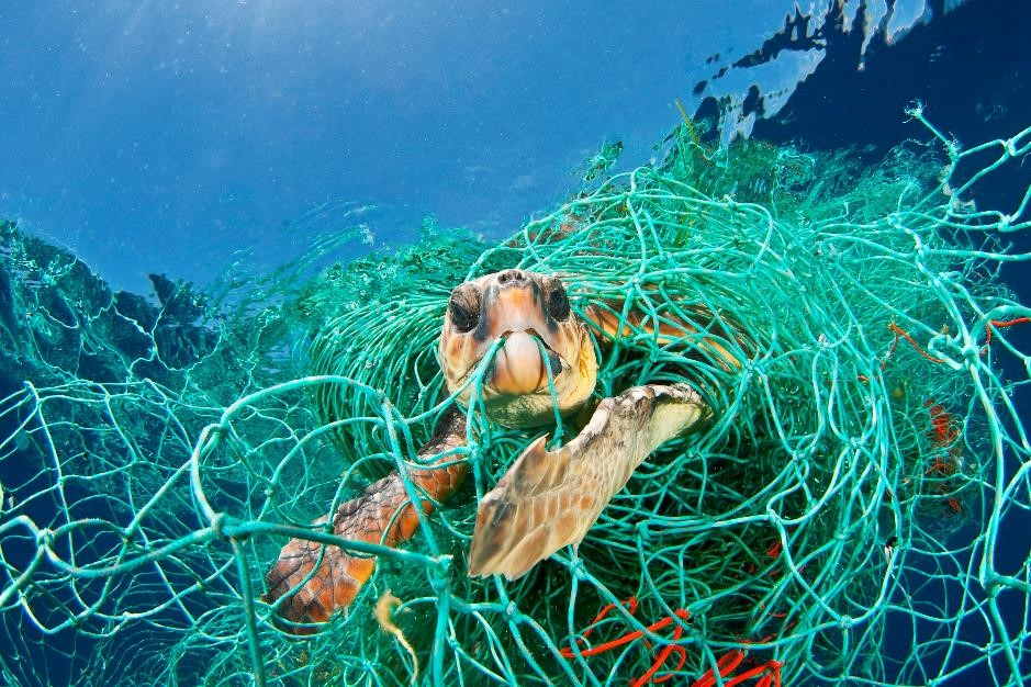 turtle fishing net oceanzen