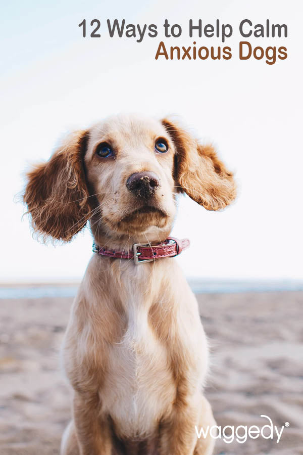 12 Ways to Help Calm Anxious Dogs