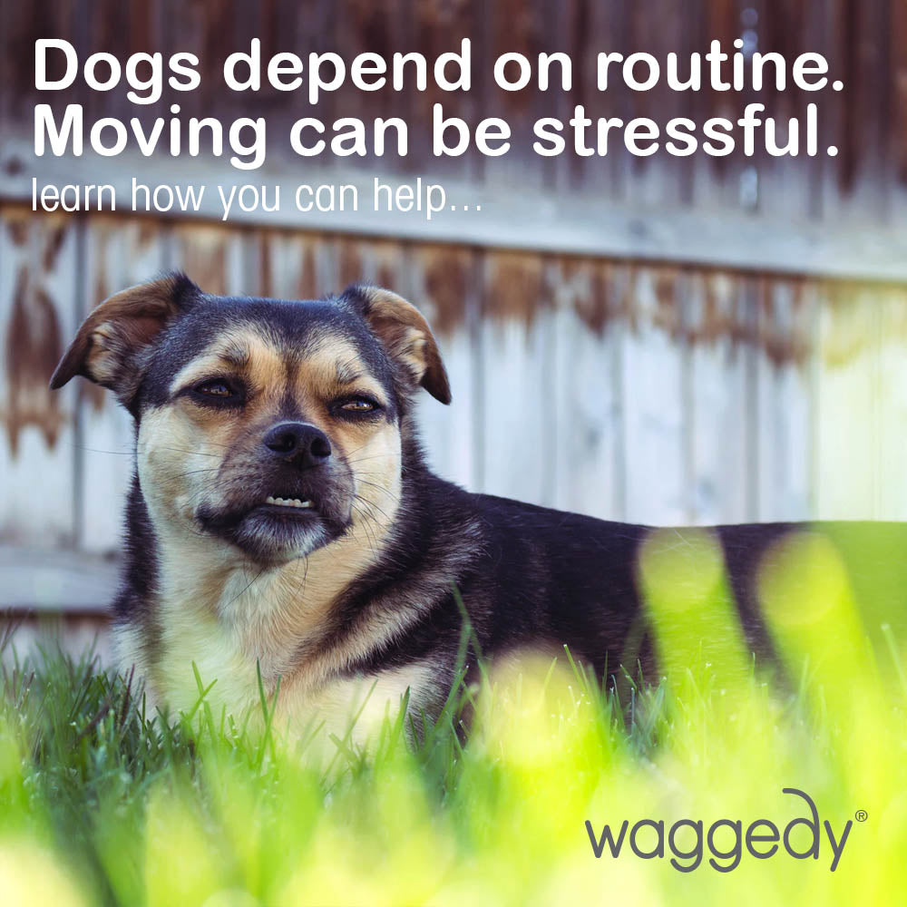 Moving can be stressful for a dog