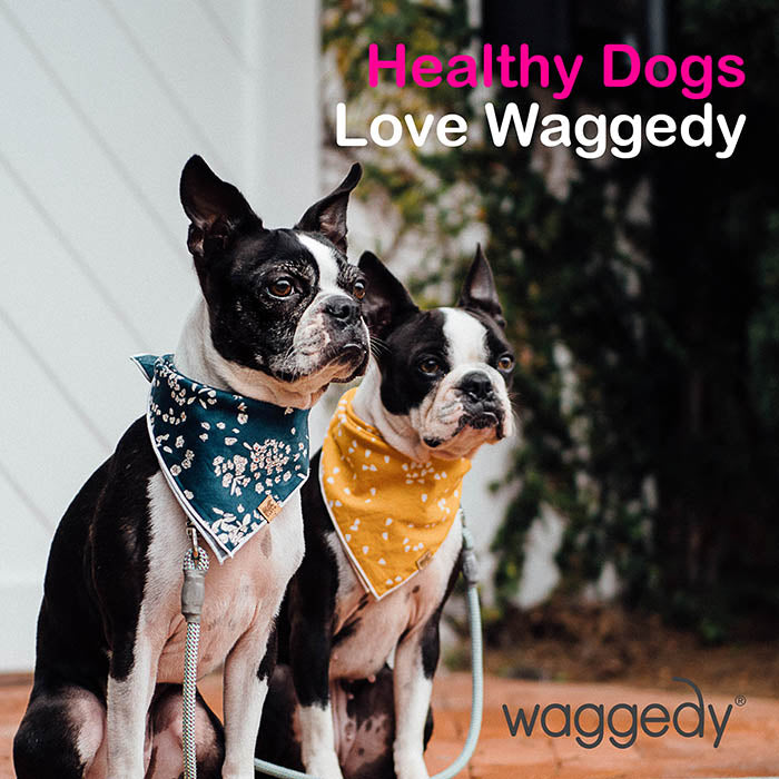 dogs love waggedy