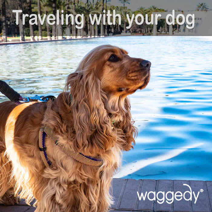 traveling with your anxious dog
