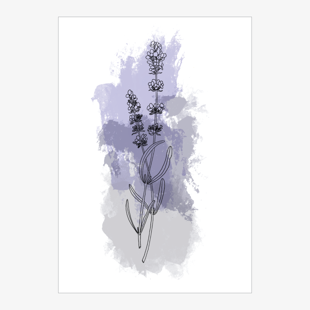 Greeting Card: Lavender