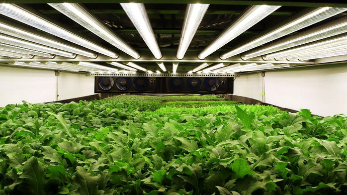 Basement Garden - Generate business through Indoor Agriculture
