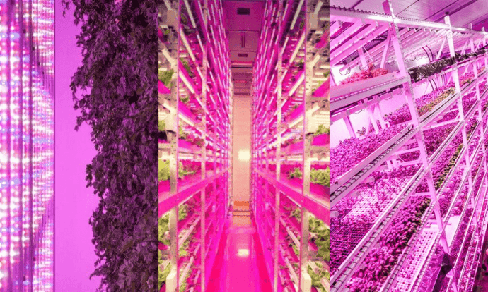 LED Grow Lights for Vertical Farming