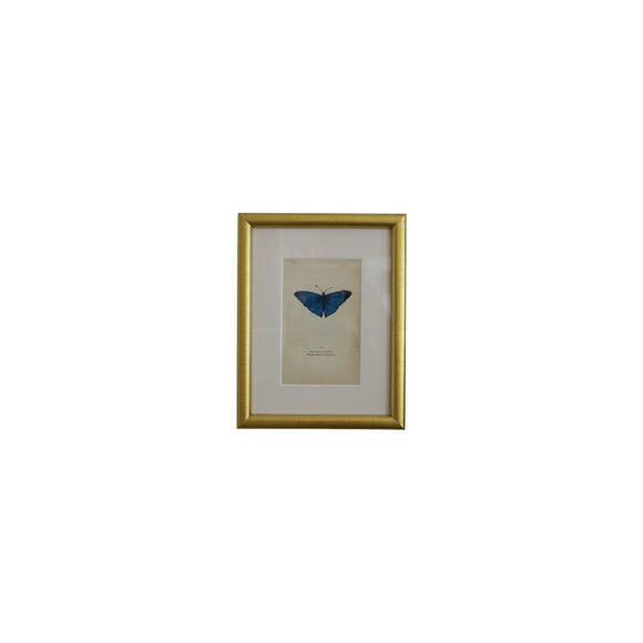 Brass Framed Insect Print