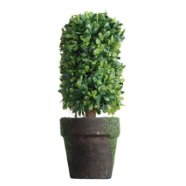 Shaped Topiary in Pot