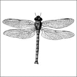 Dragonfly Thermofax Screen