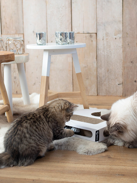 griffoir-design-chat-carton
