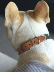 Urban-monster-collier-pour-chien-two-tone-gris