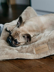 bowl-and-bone-plaid-pour-chien-chiot-nap-marron