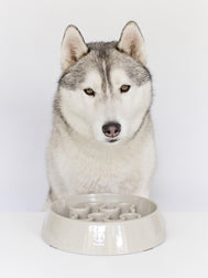 inooko - slow feeder bowl dog