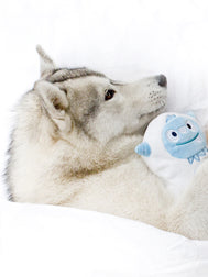 inooko - peluche yeti eco friendly resistante originale  pour chien