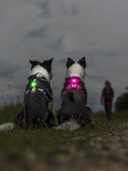 Orbiloc-safety-light-led-for-dogs-yellow
