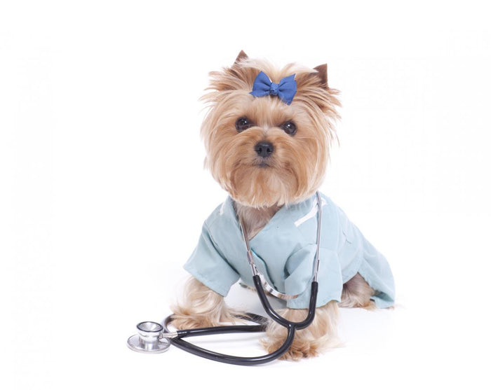 Why does your dog need a genetic health screen?