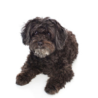 Foresight Health® Schnoodle