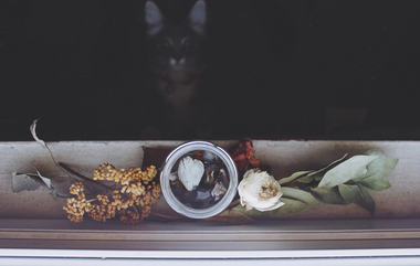 What To Do With a Deceased Pet's Belongings?