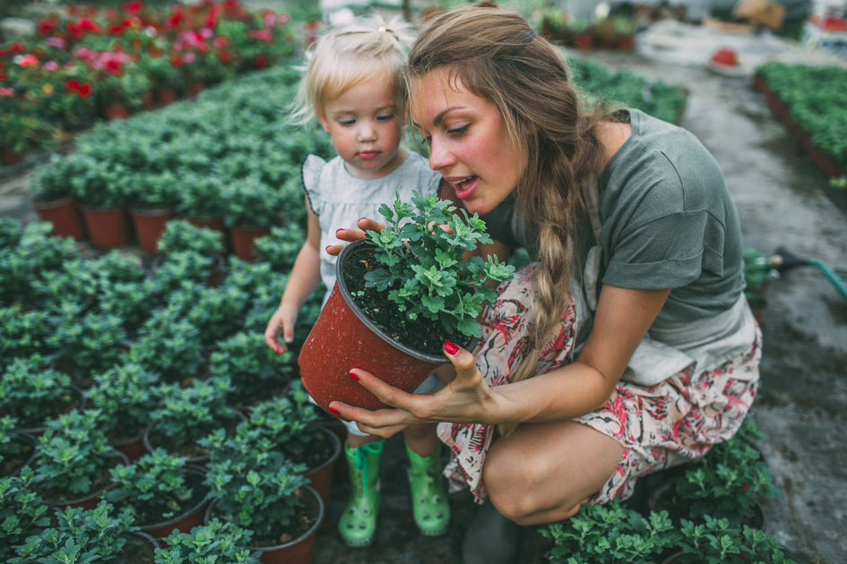Planting Cremation Ashes - Let Your Love Grow
