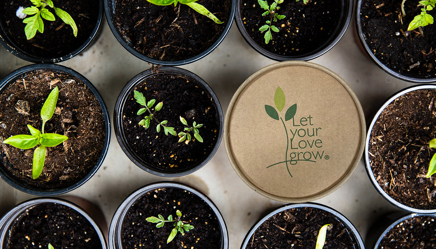 Let Your Love Grow kit among numerous small potted plants.
