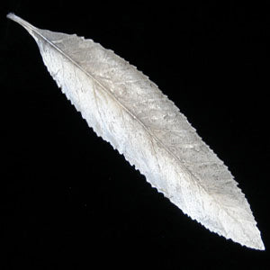 Don Drumm Long Serrate Leaf