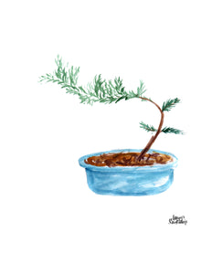 Watercolor Plant Print - Bonsai