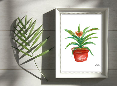 Watercolor Plant Print - Bromeliad