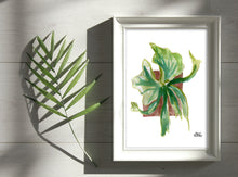 Load image into Gallery viewer, Watercolor Plant Print - Staghorn Fern