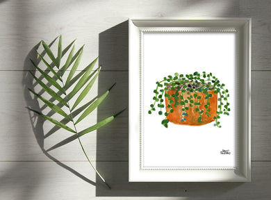 Watercolor Plant Print - String of Pearls
