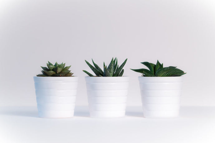 3 Unkillable Houseplants for Black Thumbs