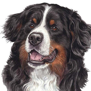 Berner Sennenhond | Diamond Painting - Myth Of Asia