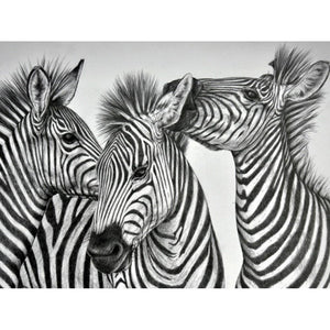 Zebra | Diamond Painting - Myth Of Asia