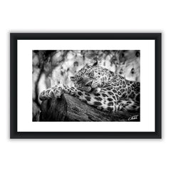 Sleepy Leopard 1 BW