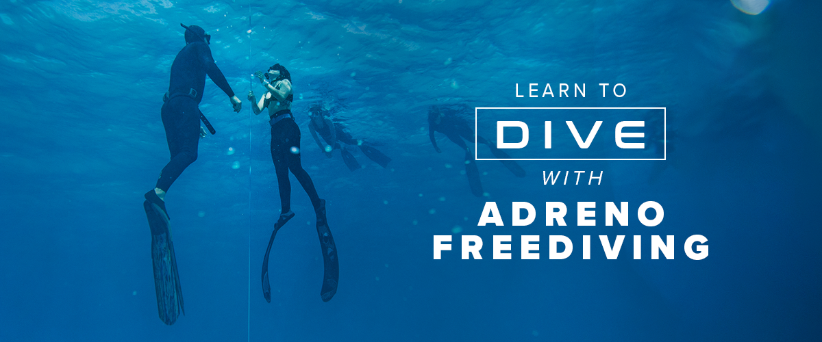Learn to Freedive Banner