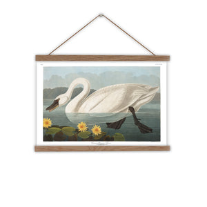 American swan canvas wall chart
