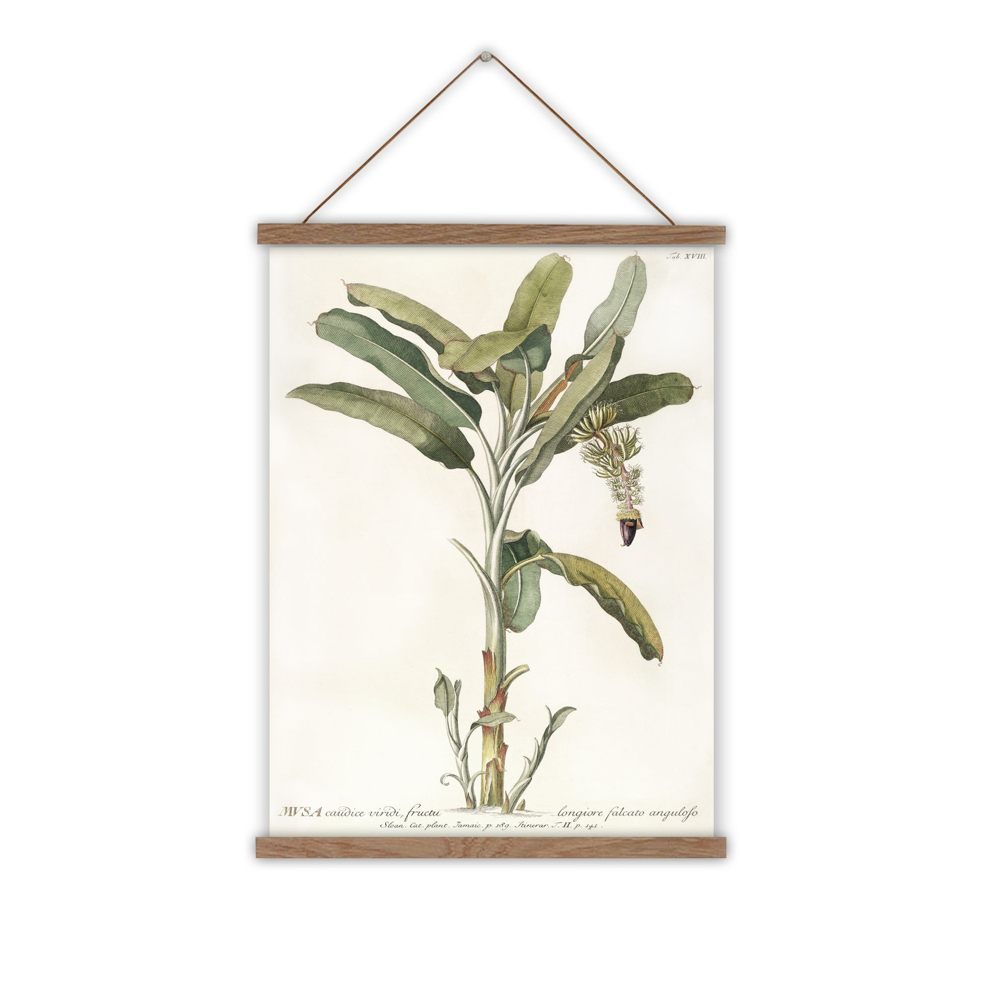 Canvas wall art banana tree