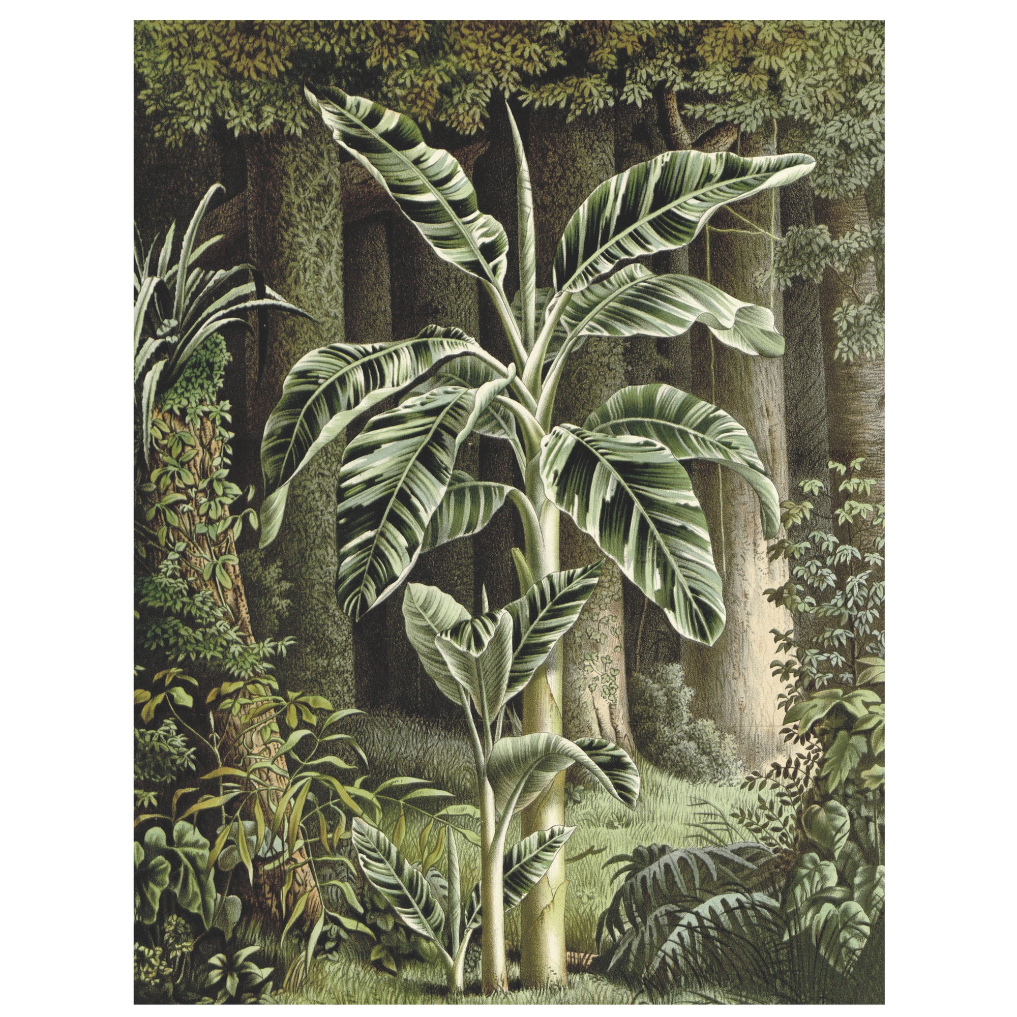 Musa Vittata jungle wall art