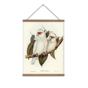 White cockatoo vintage canvas wall chart