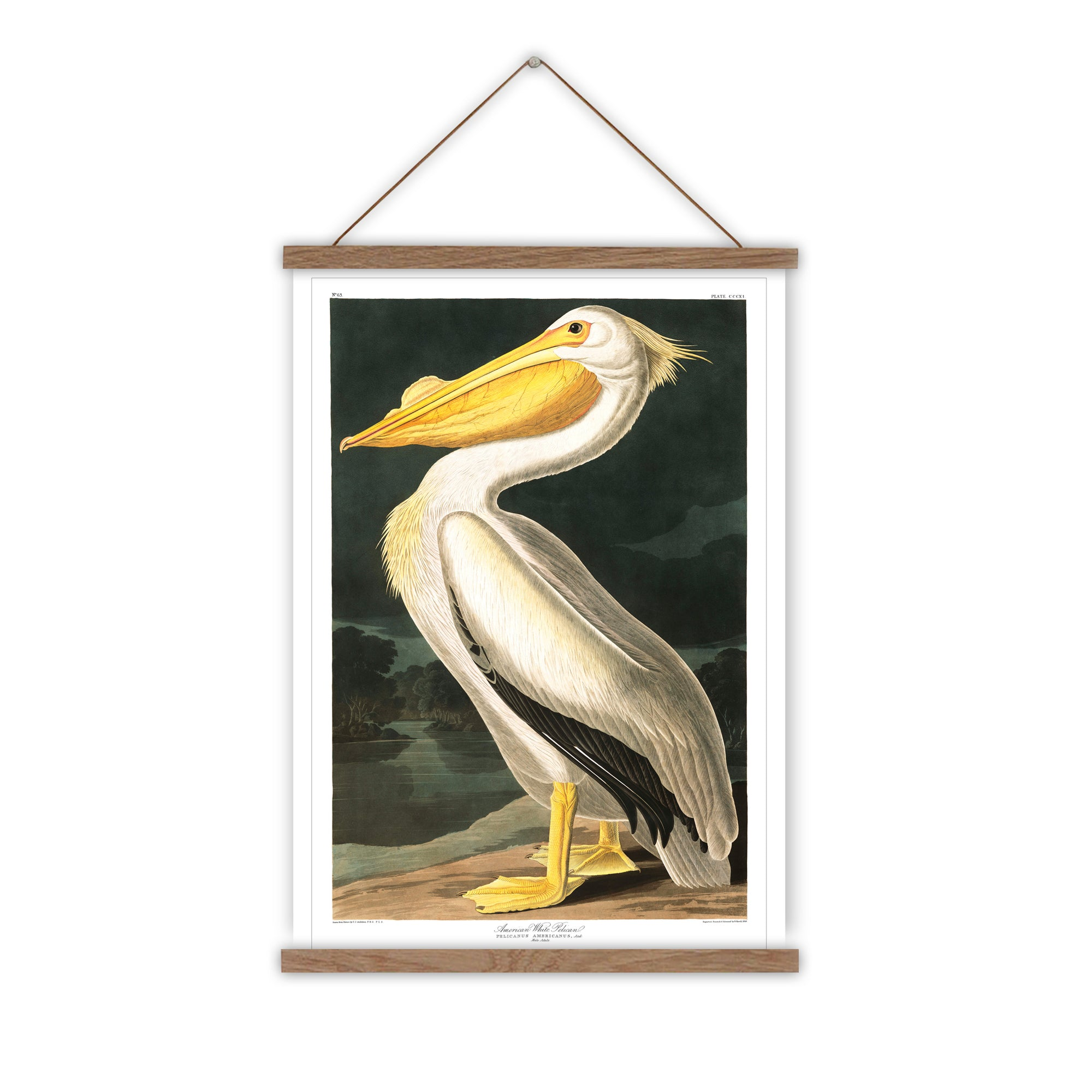 Pelican vintage canvas wall chart