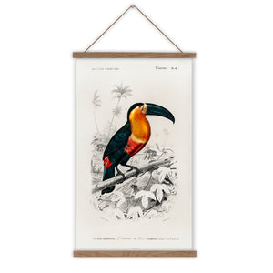 Toucan vintage poster canvas wall chart