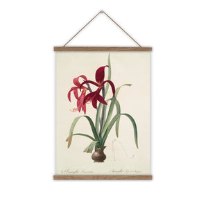 Amaryllis canvas wall chart botanical painting