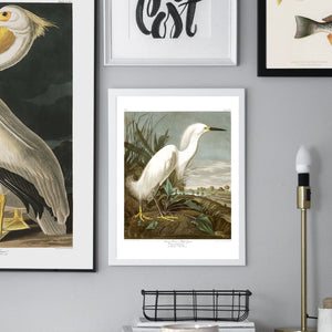 Vintage gallery wall Audubon birds