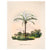Astrocaryum murumuru palm tree art print ATTICA PRESS