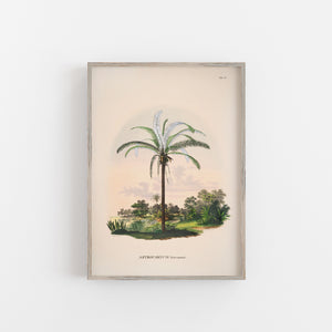 Tropical palm tree print