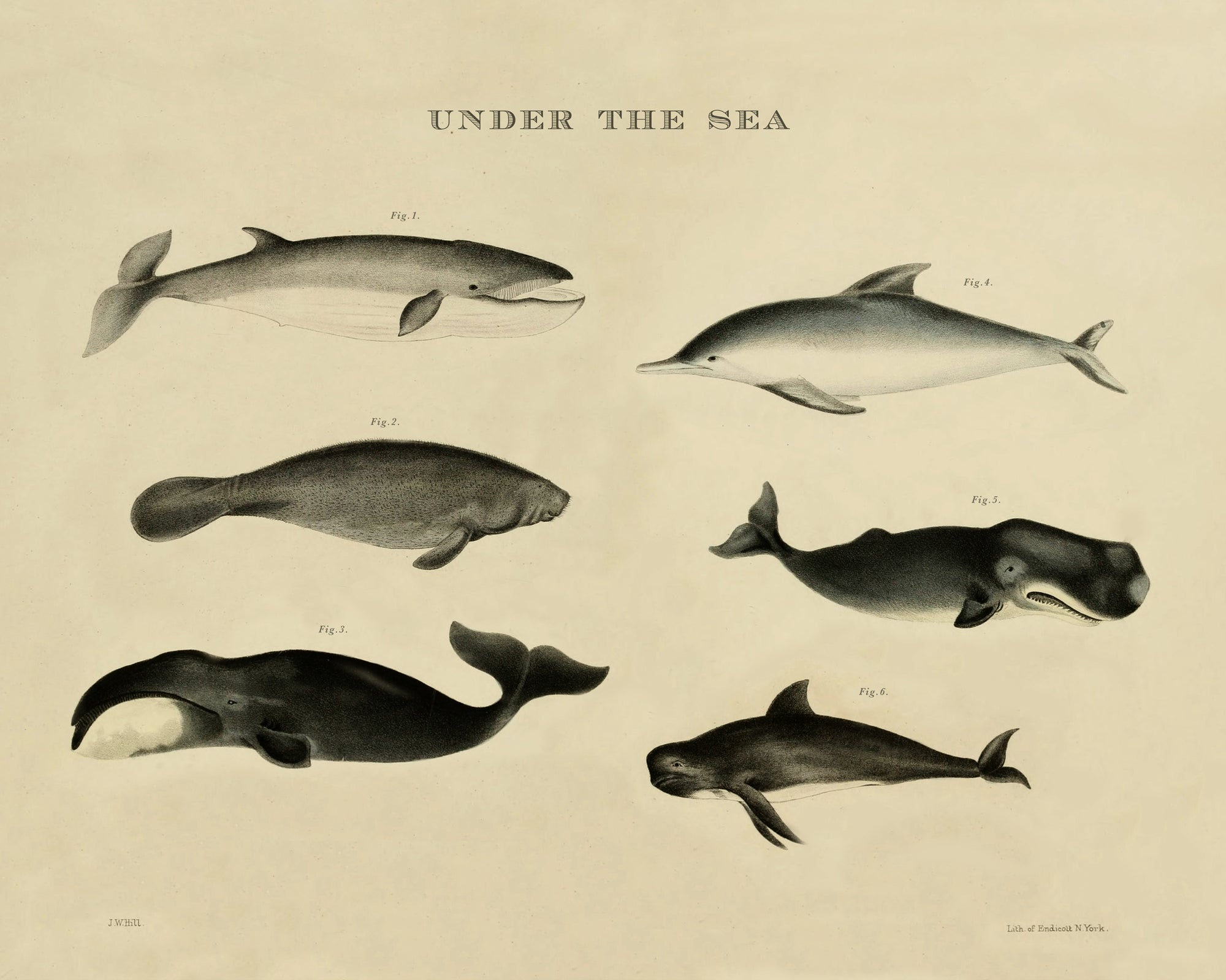 Vintage sea animals print