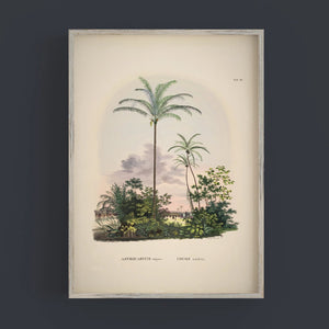 Astrocarum vulgarae palm tree print