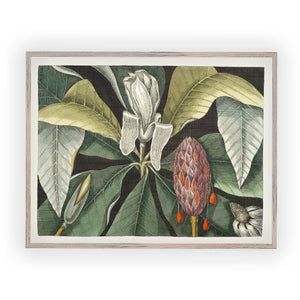 Vintage magnolia pen and ink illustration