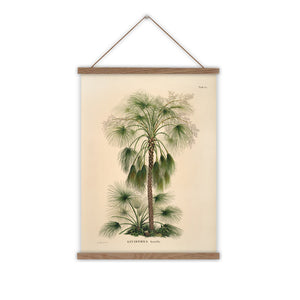 Vintage palm tree wall chart